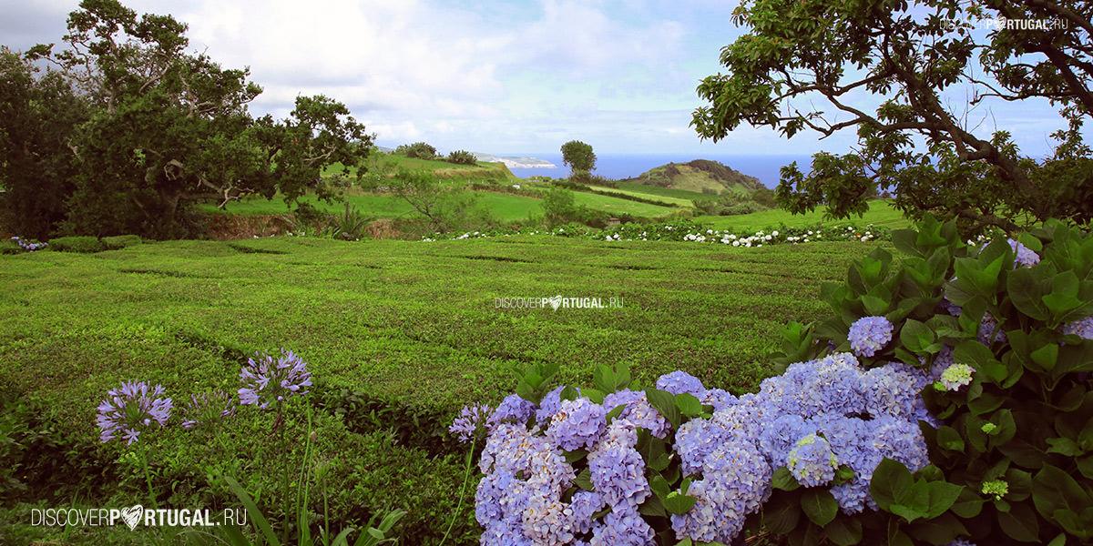 Самые странные и загадочные острова на Земле (Фото) - BlogNews.am | 600x1200