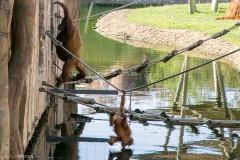 Зоопарк в Лиссабоне