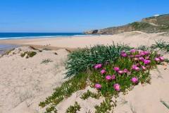 Praia-do-Monte-Clerigo-6.jpg