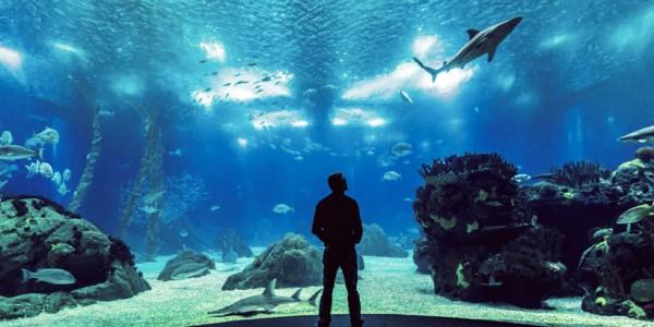 Зоопарки и Океанариумы